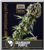 Blim Burn Grandaddy Purple Fem 3 Weed Seeds